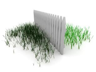 cheating-grass is always greener on the other  side