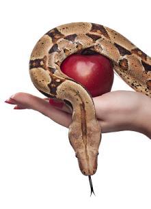 why i cheated - too many temptations